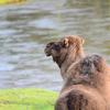 34 - brabant dierentuinen
