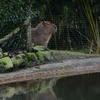 35 - brabant dierentuinen