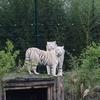 brabant dierentuinen