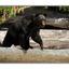 big bear - Wildlife