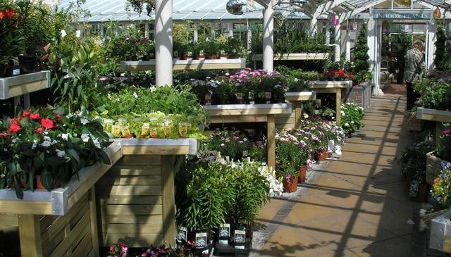 London Plant Shop Picture Box