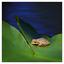 Little River Frog 2018 2 - Wildlife