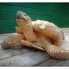 Samson the Tortoise - Vancouver Island