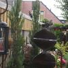 Vlaamse Gaai 25-06-18 - In de tuin 2018