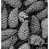 Pine Cones 2018 2 - Black & White and Sepia