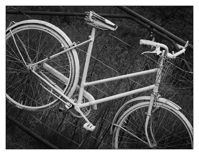 Bike Fence 2018 1 Black & White and Sepia
