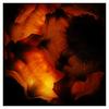 Shell Light 3 - Close-Up Photography