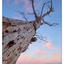 Comox Sunset Tree 2018 1b - Landscapes