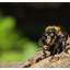 Robber Fly 2018 1 - Close-Up Photography