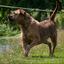 18 - honden 4 sept