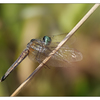 Little River 2018 Dragonfly - Close-Up Photography