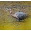 Little River 2018 Heron - Wildlife
