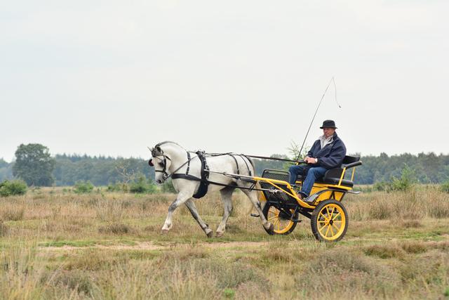 pony1 balingehofforum