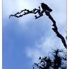 IMG 6827 - Wildlife