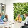 Build Indoor Green Wall for Home Purification