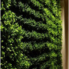 biophilic - Living Green Wall
