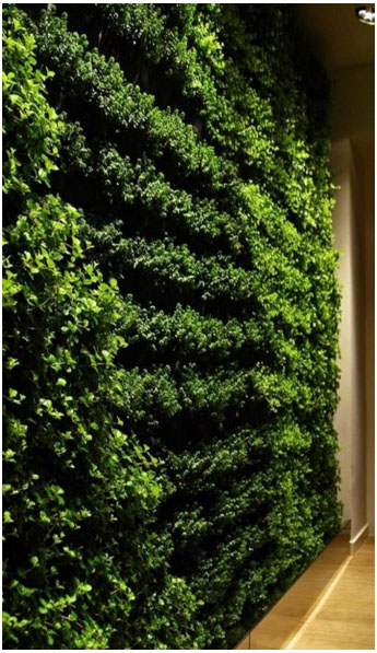 biophilic Living Green Wall