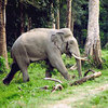 Discover Eastern Himalaya T... - Picture Box