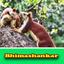 Bhimashankar 2 - all images