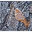 Frosty Estuary 2018 5 - Close-Up Photography