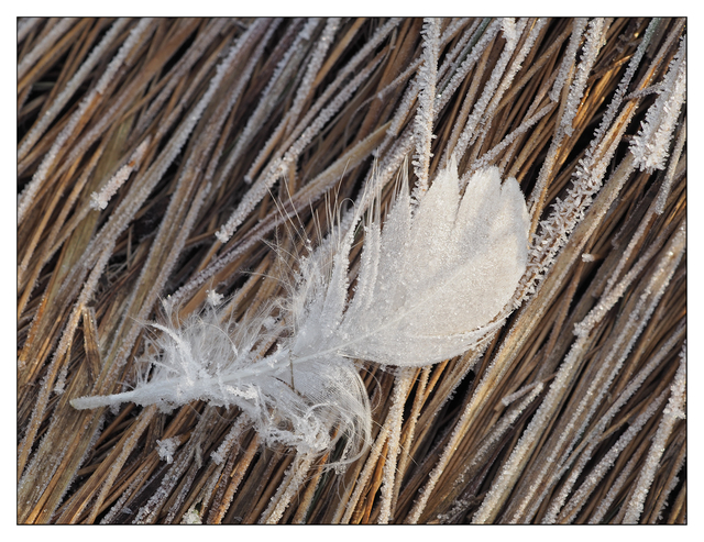 Frosty Estuary 2018 3 Close-Up Photography