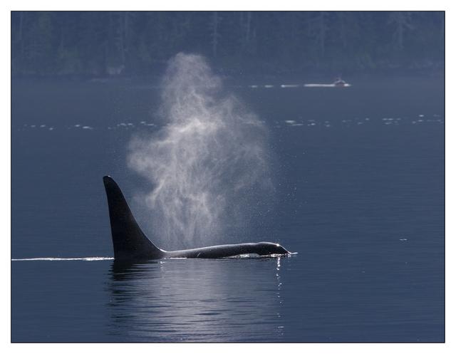 whalewatching 2007 Wildlife