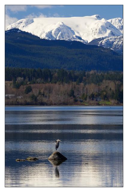 Heron and Glacier 2007b Wildlife