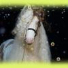 legend1bbbbbkopie2 - foto's van website portfoli...