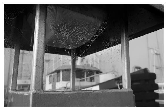 Web Docks B&W 2019 4 Black & White and Sepia