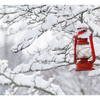 Snow Lantern 2019 1 - Comox Valley