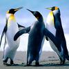 Penguins - http://www.supplementdiets