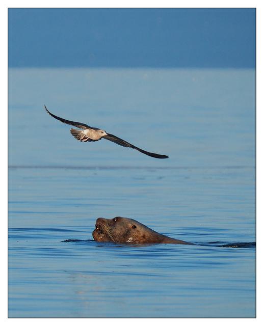 Strait of Georgia 2019 2 Wildlife