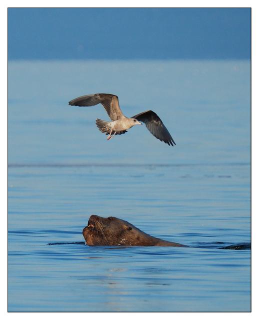 Strait of Georgia 2019 3 Wildlife