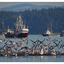 Strait of Georgia 2019 5 - Vancouver Island