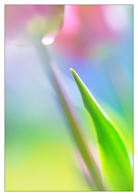 Backyard Flower 2019 2 Close-Up Photography