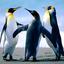 Penguins - http://www.gethealthyfreedom.com/slimlook-forskolin/