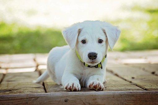 puppy-1903313  340 Picture Box