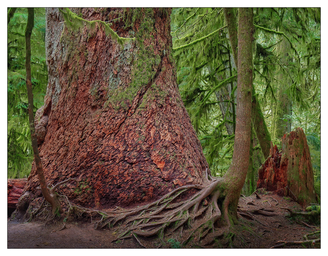 Cathedral Grove 2019 2 Nature Images