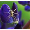 Lupin Spider 2019 b - Close-Up Photography