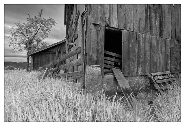 Old Barn 2019 4 Black & White and Sepia