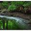 Brooklyn Creek Park 2019 2b - Nature Images