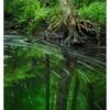 Brooklyn Creek Park 2019 1 - Nature Images