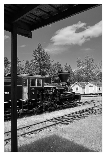 BC Forest Discovery 2019 16 Black & White and Sepia