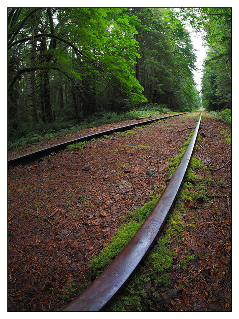 Rosewall Tracks 2019 1 Vancouver Island