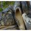 Biggs Park 2019 2 - Nature Images