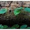 Brooklyn Creek Park 2019 5 - Nature Images