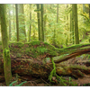 Cathedral Grove 2019 5 - Panorama Images