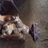 ZetorSuper 35 m54u - tractor real