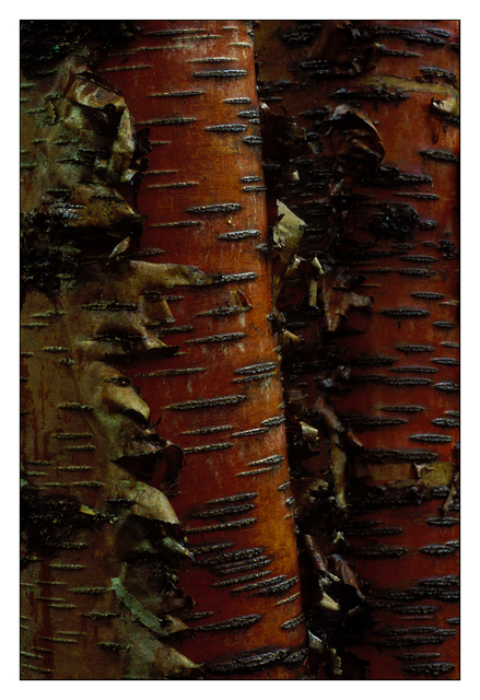 Tree Detail -slide film 35mm photos