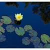 Milner Gardens 2019 5 - Nature Images